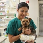Nursing care for your pet by their own doctor.