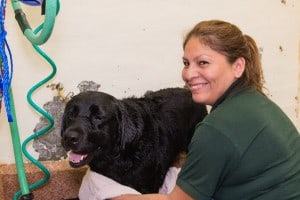 Fun in the tub at Old Dominion Animal Health Center