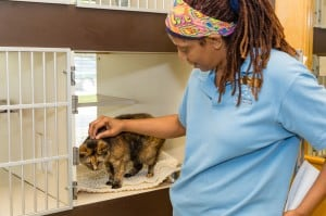 Cats get multiple level condos with an view when they stay at Old Dominion Animal Health Center