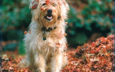 Things To Do For Your Dog This Fall
