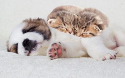 Top Pet Care Tips