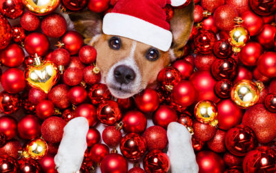 Holiday Foods To Keep Away From Your Pets