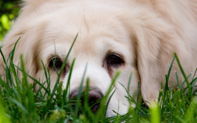 Does my pet need a varied diet?