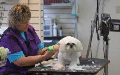 The Significance of Pet Grooming