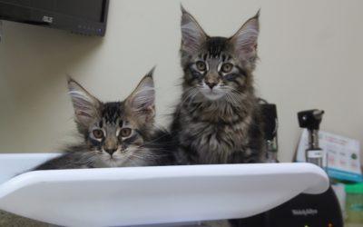 Do Cats Need Baths Too?