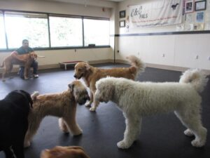 Puppy daycare