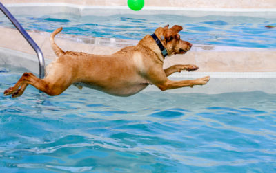 Can My Dog Go Swimming In My Pool?