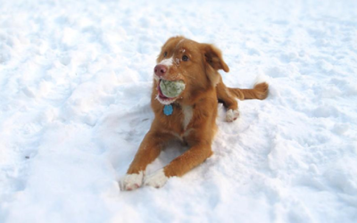 Keeping Your Dog Active In Winter
