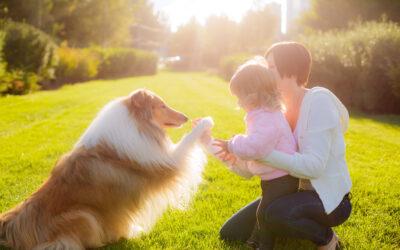 How Do Dogs Learn?