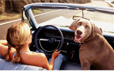 Tips For Taking Your Dog On Long Road Trips